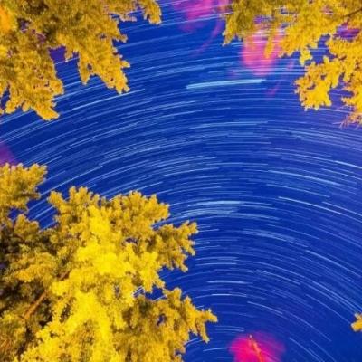 The Golden Autumn In Beijing
