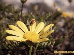 Creative moment of solar energy swing flip flap ladybug