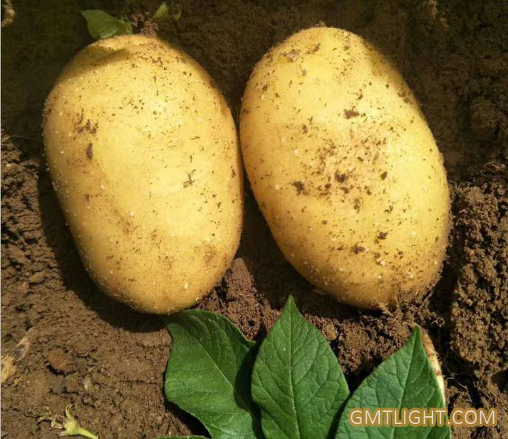 土豆的药用价值