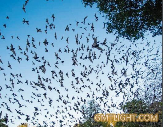 eat bats