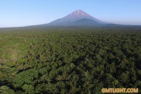 """富士山景点:美丽的青木原树海沦为""""自杀胜地""""?"""